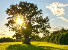 Как простить родителей и подключиться к благосостоянию Рода. Метод 2 стула